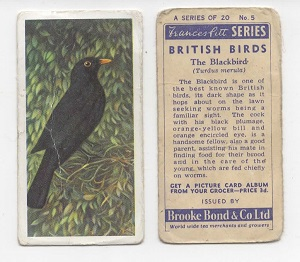 Image result for brooke bond wild birds in britain blackbird